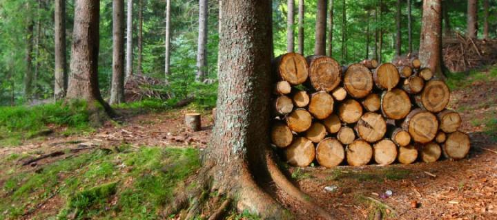 Les – naše naravno bogastvo