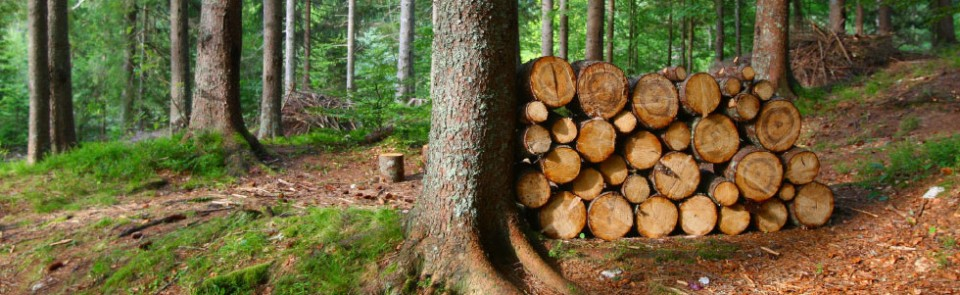 Wood – our natural treasure